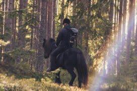 Ridtur på islandshäst i Hamrångebygden - foto Hedenstugan
