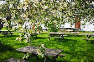 Fika under äppelträden hos Axmar Brukscafé - foto Aja Axlund